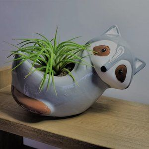 Other - Raccoon Animal Planter with Air Plant